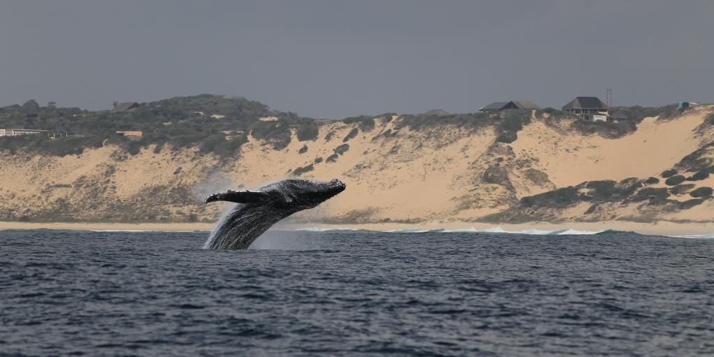 Whales-mermaids-Activism-HumanAquariumUk