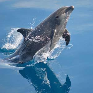 dolphin scramble
